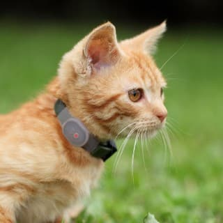 Pet trackers are mostly popular amongst dog and cat owners.